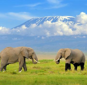Amboseli elephants infront of Mt. Kilimanjaro