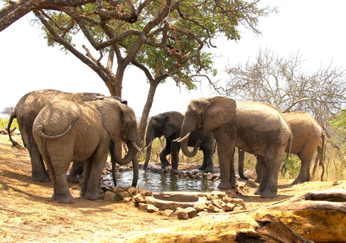 Tarangire elephants at water hole