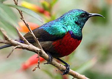 Birdwatching - Nyungwe Forest