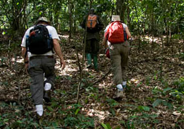Nyungwe Forest Hiking