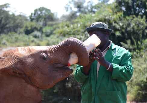 David-Sheldrick-Wildlife-Trust