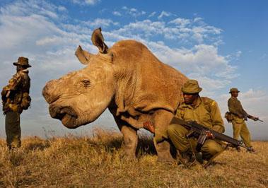 Sudan the Nothern White Rhino
