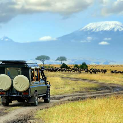 best of tanzania african safari