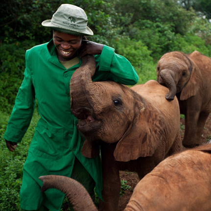 Daphne Sheldrick Wildlife Trust elephant
