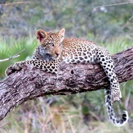 Delux african safari