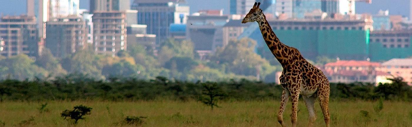 Discover Nairobi