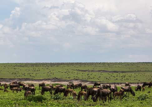 Tanzania Value Safari