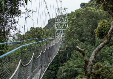 Canopy Walkway - Nyungwe Forest
