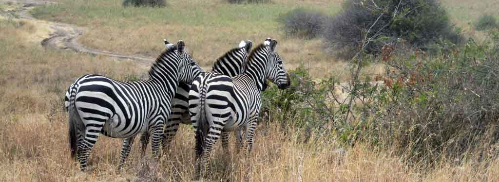6 Reason You Must Visit Nairobi in 2019