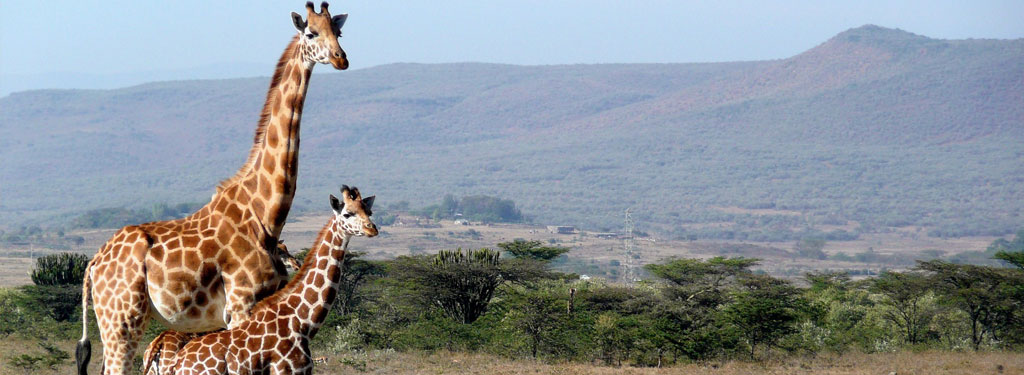 New Wildlife Policy a Boost to Conservation, Cs Balala