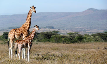 GIRAFFES WIN BIG AT CITES WILDLIFE CONFERENCE